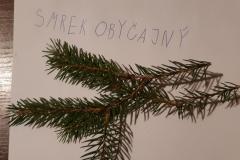Dodo_Dzuren-stromy2