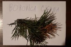Dodo_Dzuren-stromy3