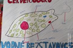 cervenoocko-od-SamkaD